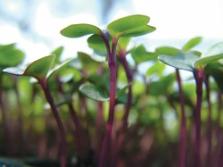 Start seeds now for strong, healthy plants