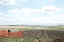 Preparing the land for planting.