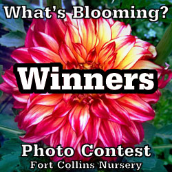 What's-Blooming-Winners-web-250x250