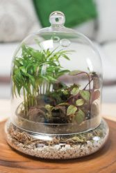 Syndicate Home And Garden Terrariums Pottery Fort Collins Nursery